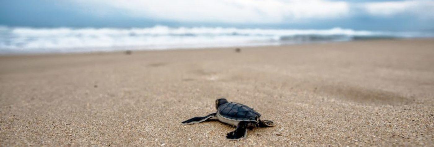 turtle 2201433_1920